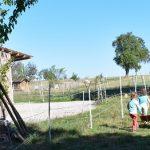 Drei Mädchen gehen zur Kräuterecke