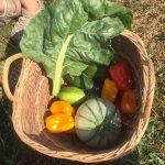 Gemüse für die Kinder