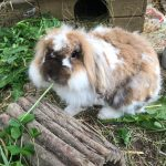 Kaninchen aus dem Bauernhofkindergarten in Karlsbad