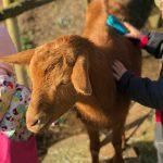Kind streichelt eine Ziege